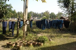 Phrae - indigo shirts on the washing line