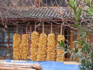 corn small